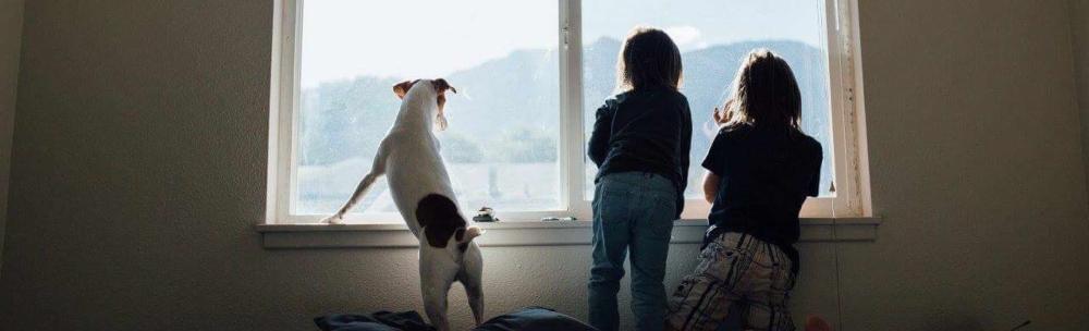 foto - kinderen en hond kijken uit raam